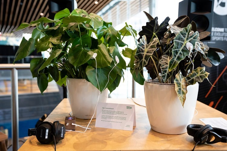 Two Plants In Music Studio